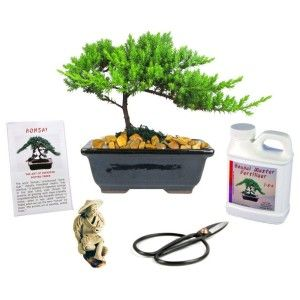 Hostess Gift Etiquette    Bonsai Tree Gift Kit  Complete Bonsai Gift Kit Includes Fertilizer, Figurine, and Clippers, it is already beautifully gift wrapped.