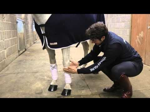 Looking after your horse's legs – Charlie Hutton