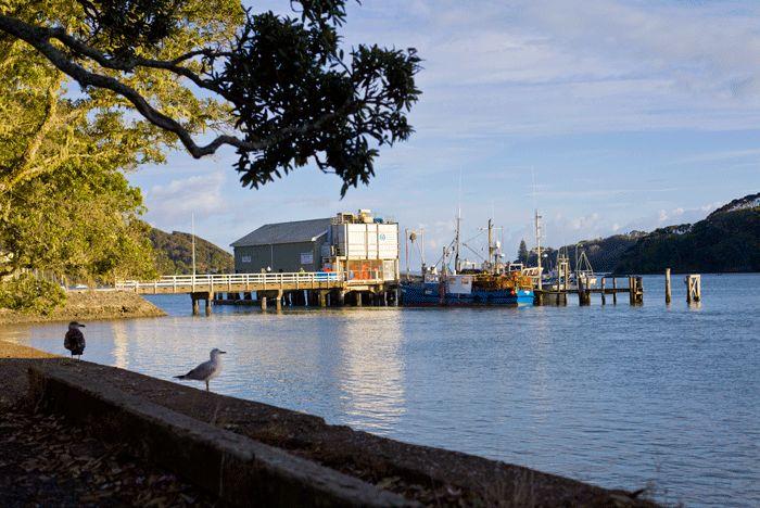 Just another morning at Mangonui Wharf (Doubtless Bay NZ). copyright © Debra Stratford