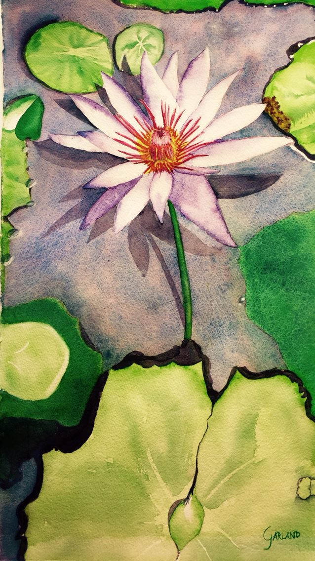 Water Lily found in Fort Myers. Original Watercolor 12x22