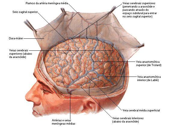 Aula de Anatomia | Menínges e Líquor