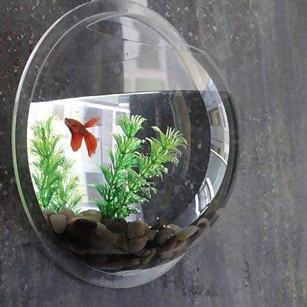 6382 best Aquarium and Bonsai Tree images on Pinterest | Rugs ...