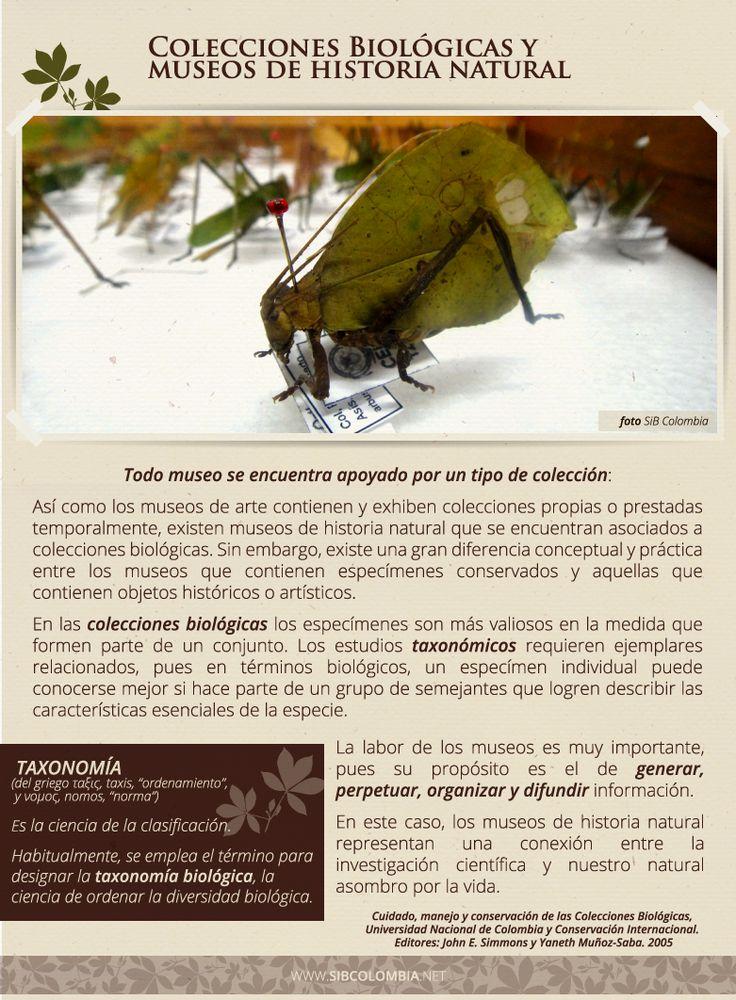 Colecciones Biológicas y Museos de Historia Natural