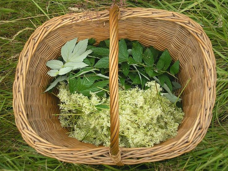 Meadowsweet is a common herbal treatment for ulcers