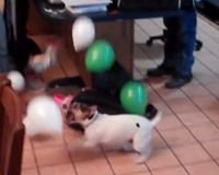 #Hond haat #balonnen