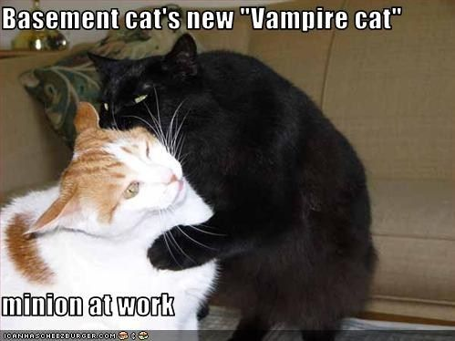 basement cat vampires minion cat stuff cat lady basements fur babies