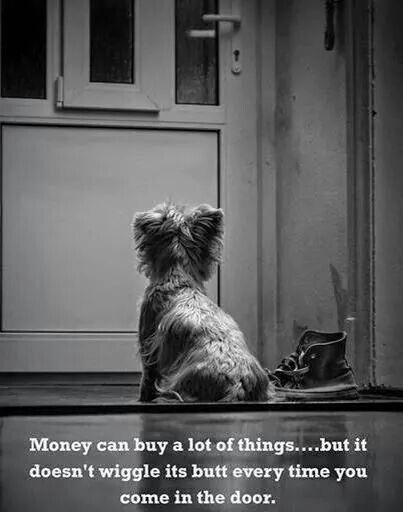 But money CAN buy a lot of wiggly butts that WILL greet you at the door. See my logic here? ;-)