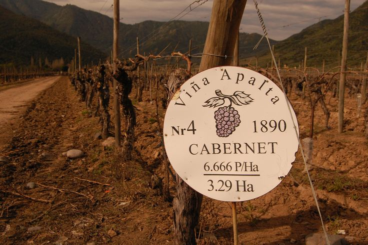 Visiting wineries at Colchagua Valley Eureka Travel #SouthAmerica
