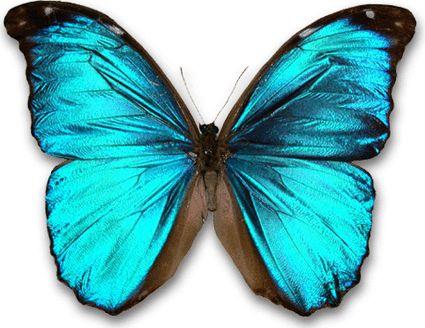 http://www.uni-graz.at/exp2www/Nanotechnologie/images/morphofalter.gif