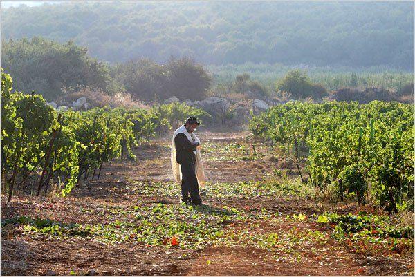ЛехАим! Вино Израиля