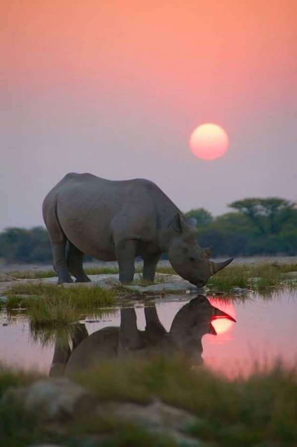 This has to the most beautiful Rhino picture ever!!