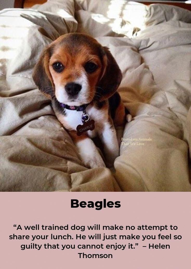 Visit Our Site For More Relevant Information On Beagle Puppies
