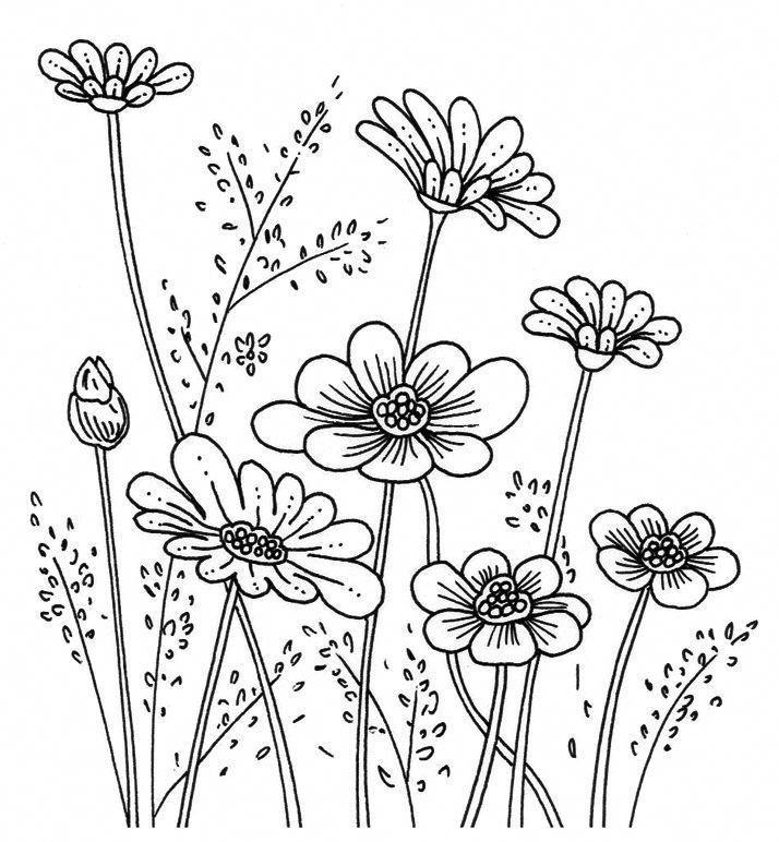 галина, картинки контуры полевых цветов оба любят друг