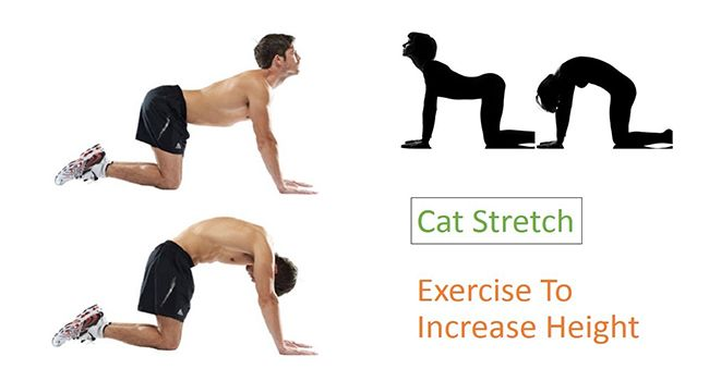 Cat stretch, peregangan kucing, latihan menambah tinggi badan, cara tambah tinggi badan alami, latihan menambah tinggi, peregangan menambah tinggi badan