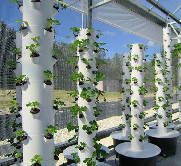 43 best images about how my garden grows on pinterest gardens vegetables and urban gardening - Garden tower vertical container garden ...