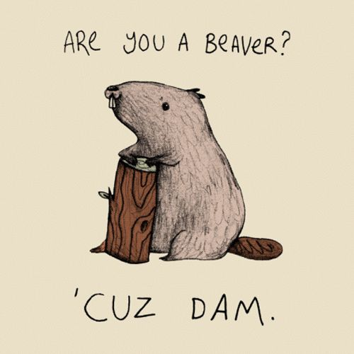 Funny pick-up line t-shirt. Are you a beaver? 'Cuz Dam. Get the Tee: http://www.feistees.com/are-you-a-beaver-t-shirt/