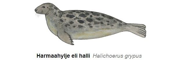 Itämeren merinisäkkäät