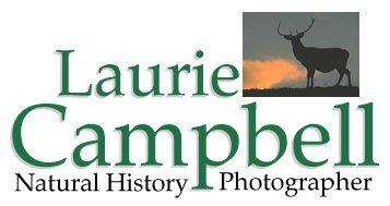 Laurie Campbell