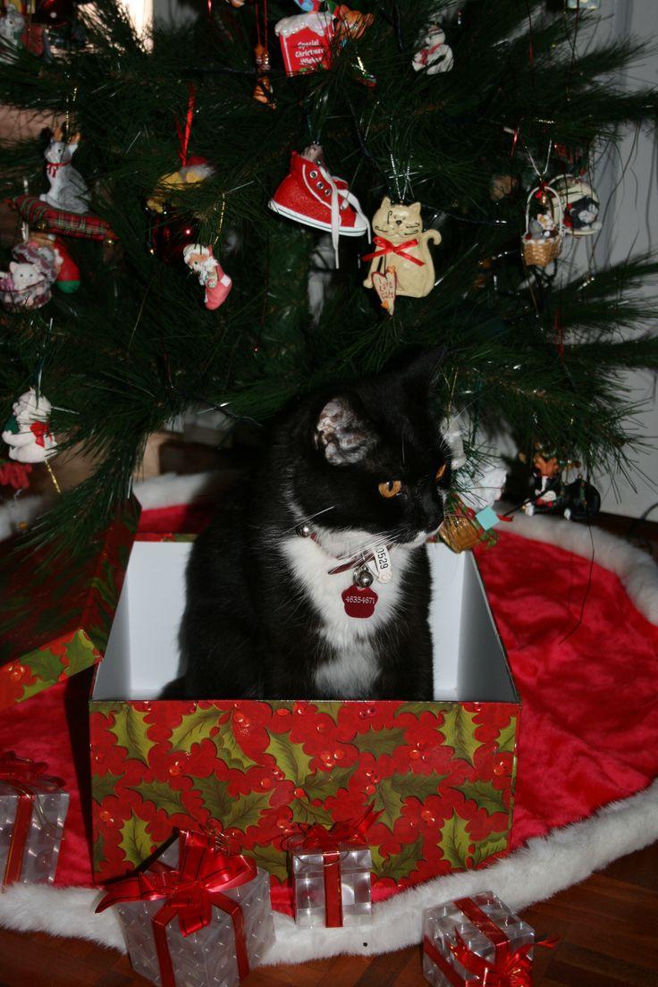 Tigger - Christmas 2009