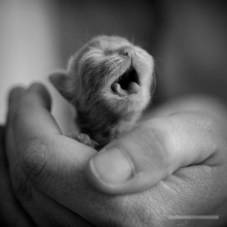 Squee! Baby kitten!