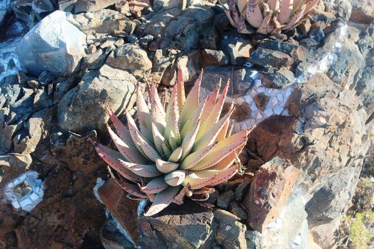 vet plant