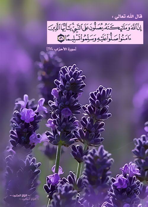 اللهم صلي على سيدنا محمد -