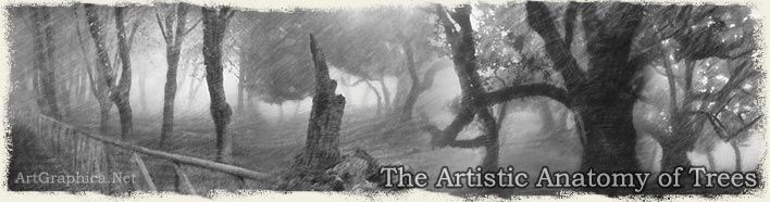 Learn how to draw trees - Artistic Anatomy of Trees Book