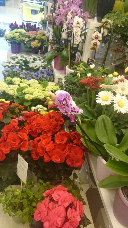 Summer in Flower shop Ikivihreä