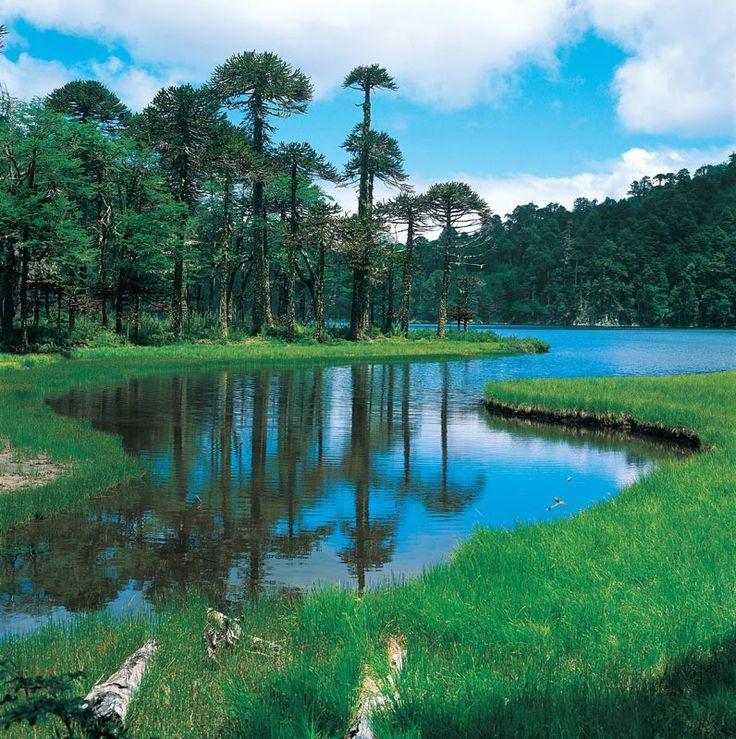 Lago Toro ubicado en el Parque Nacional Huerquehue, Novena ...