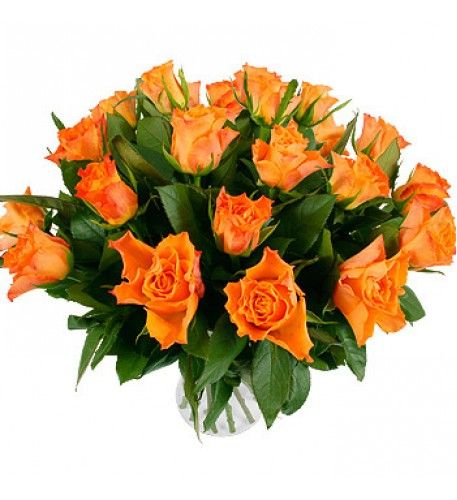 Orange roses have emerged as one of the true stand-outs among today's popular rose varieties.