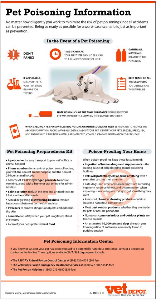 Learn what to do if your pet has ingested a poisonous substance! Important! Please re-pin!
