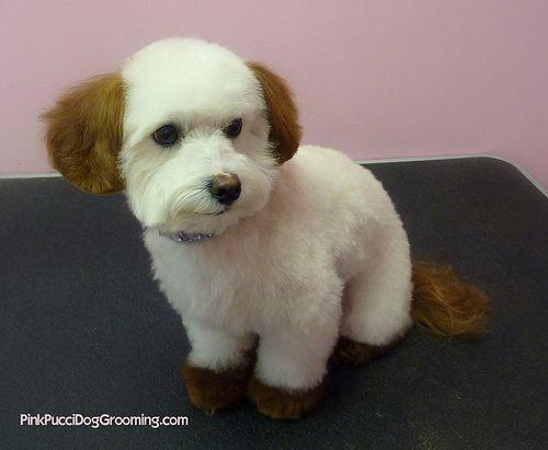 Google Image Result for http://3.dog-milk.com/images/2010/08/pet-grooming-pink-pucci.jpg