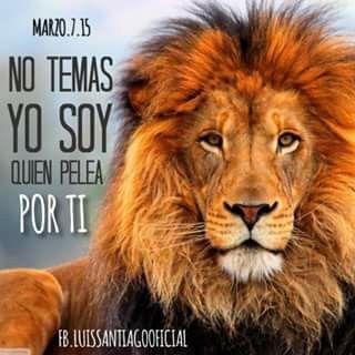 El es El León de la tribu de Judas, quien pelea por ti