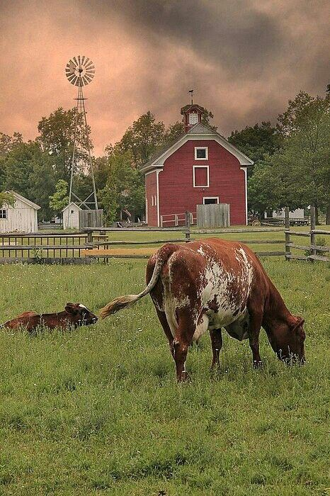 country bliss red barn cow wind mill