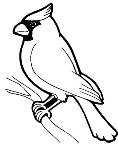 Cardinal Coloring Page Coloring Bird Outline Bird Coloring Pages Black And White Birds