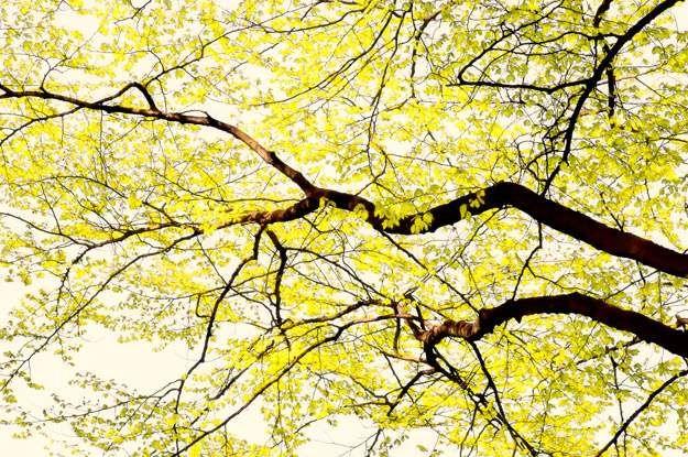 tree view 138 fall