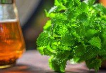Meduňka – jak ji sklízet a skladovat + 5 domácích receptů