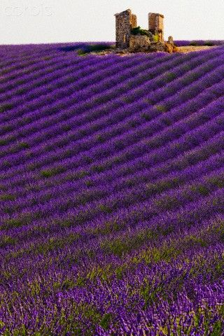 Valensole, Provence-Alpes-Côte d'Azur, France #lavenderfields #France #photography                                                                                                                                                      Más