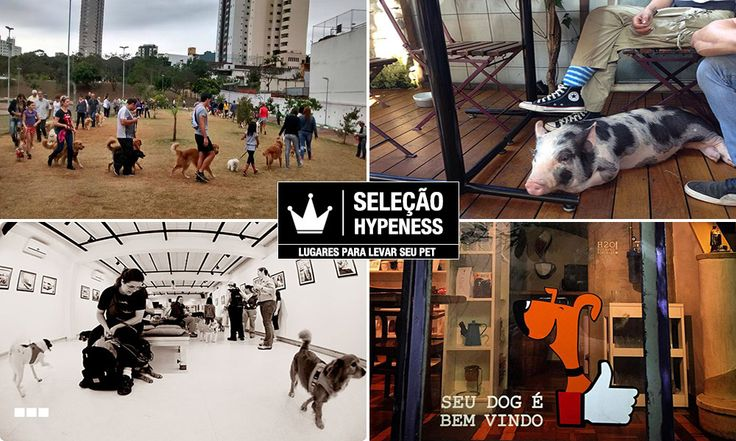 Seleção Hypeness: 20 lugares para ir na companhia de seu animal de estimação em São Paulo