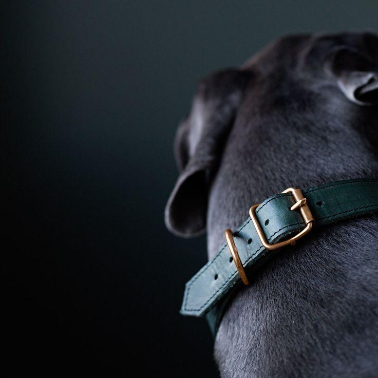 Uljas collar from www.kindfordogs.fi