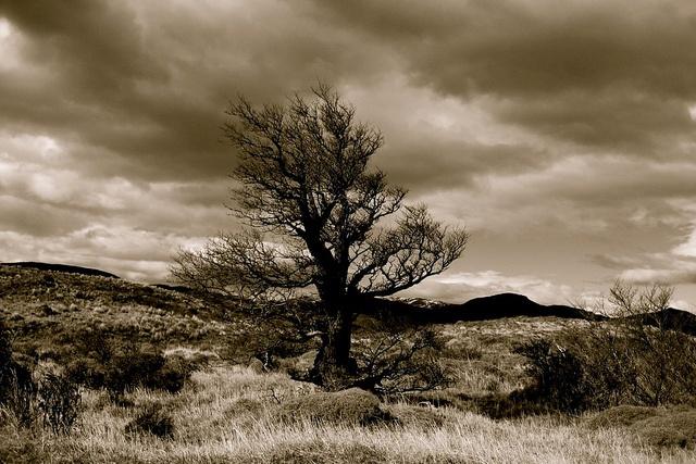 Wind swept Patagonia, via Flickr