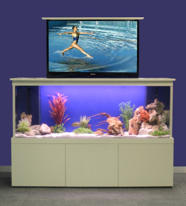17 Best Images About Project Fish Tank On Pinterest: 17 Best Images About Go Fish On Pinterest
