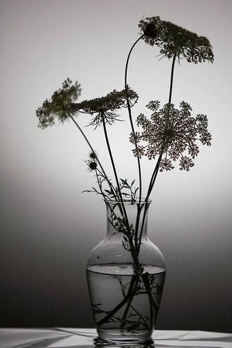 Vase with flowers silhouette