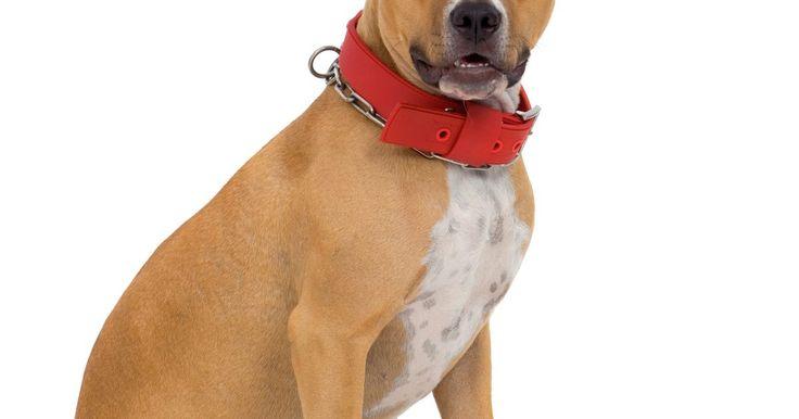 """Lista de las diferentes razas de Pit Bull. El """"Pit Bull"""" no es una raza, sino que es una etiqueta para muchas diferentes razas bulldog según informa Pit Bull Advocate 101, un sitio web dedicado a los pitbulls. Las razas más comunes que se contemplan como Pit Bulls son el Bulldog Americano, American Pit Bull Terrier, American Staffordshire Terrier y el Staffordshire Bull Terrier. Sin ..."""