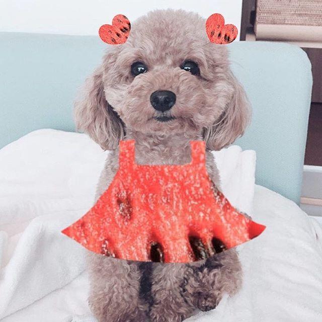 流行りのスイカドレス〜! もし作って欲しい方いたら言ってください😂