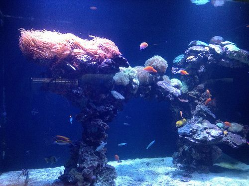USA Texas Dallas Aquarium