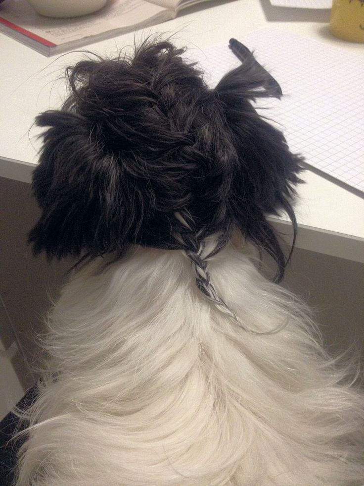 Dogs fur can be braided too :D