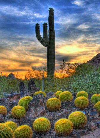 Scottsdale, Arizona- desert botanical garden in Phoenix
