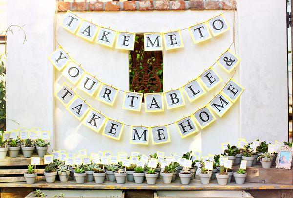 Sukkulenten als Gastgeschenk für die Hochzeit | Friedatheres