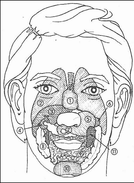 Principalele diagrame ale zonelor si punctelor din reflexologia faciala Dien'Cham'